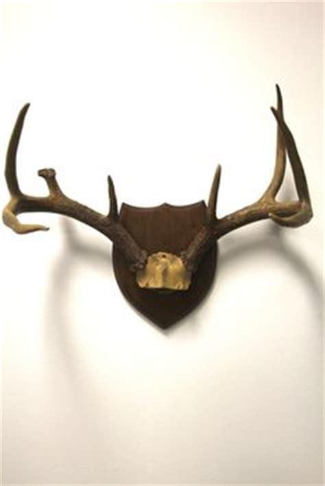 antler mounting plaque sheds elk moose deer kit