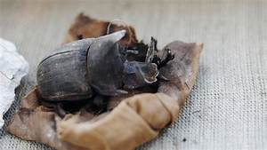 Rare Mummified Scarab Beetles Found In Ancient Egyptian