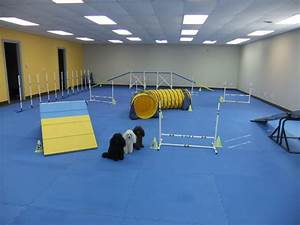 dog training class information paws 4 fun With dog training facility