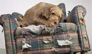 15 ways to prevent dogs from chewing furniture and belongings With stop dog chewing bed