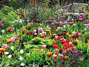 Tulpen Im Topf In Der Wohnung : der ganz normale tulpenwahnsinn blatt bl te mein garten ~ Buech-reservation.com Haus und Dekorationen