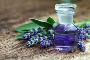 Duftöl Selber Machen : lavendel l herstellen es gibt zwei verfahren mit denen man lavendel l selber machen kann die ~ Orissabook.com Haus und Dekorationen