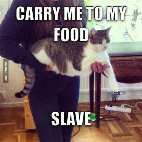 Sassy Cat Meme - 289 best kittens to cats images on pinterest