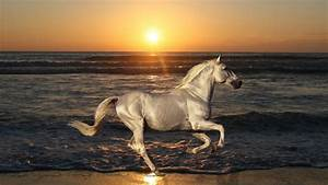 Horse Wallpapers HD Pictures | One HD Wallpaper Pictures ...