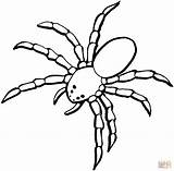 Spider Coloring Pages Printable 2009 Tablets Compatible Ipad Android Version sketch template
