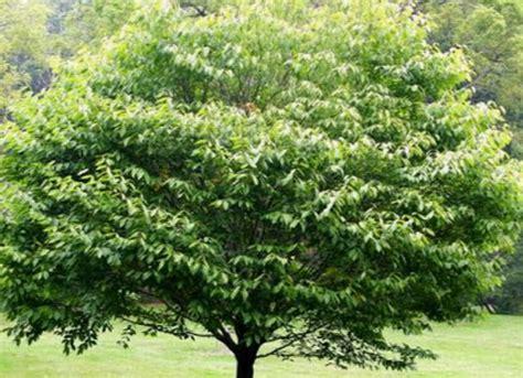 Lapu koki, krūmi - Katalogs - stadi-sakstagals.lv
