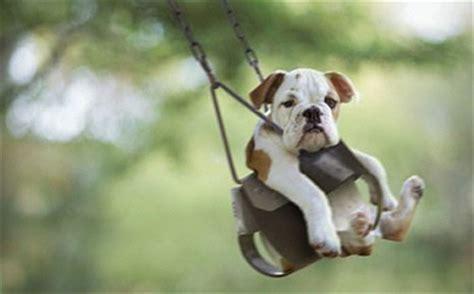 professional photos of animals airborne animals professional pet transportation services
