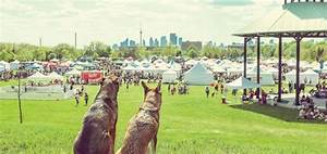 Woofstock Festival For Dogs—The Largest Outdoor Dog Party ...