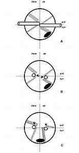 Diagram Volvox Colony