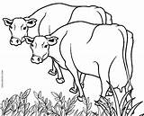 Cow Coloring Printable Cows Colour Cool2bkids Farm Adults Colorado Getdrawings Getcolorings Drawing Animals sketch template