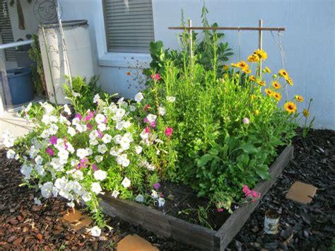 Central Florida Butterfly Garden Ideas Photograph