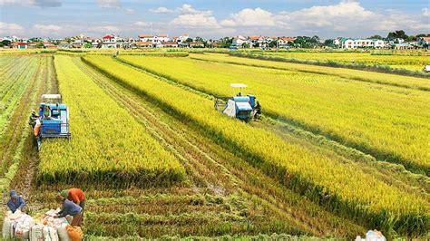 Đt việt nam giành vé dự futsal word cup 2021. Một số giải pháp nhằm phát triển nông nghiệp Việt Nam