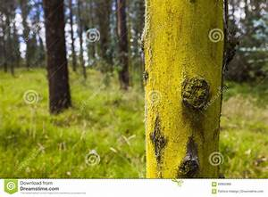 Achat Tronc Arbre Decoratif : tronc d 39 arbre jaune photo stock image 69962888 ~ Zukunftsfamilie.com Idées de Décoration