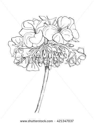 Flowers Ilustrace a kresby | Flower sketches, Line artwork