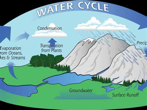 water cycle  stages  water  aleesha naylor