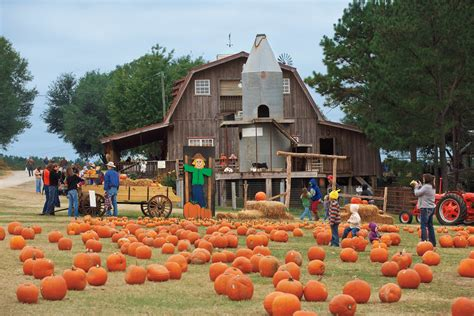 Pumpkin Patch Farms Mississippi by What Is Agritourism Farm Flavor