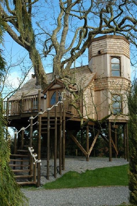 crazy daze nite dreams field trip tree houses
