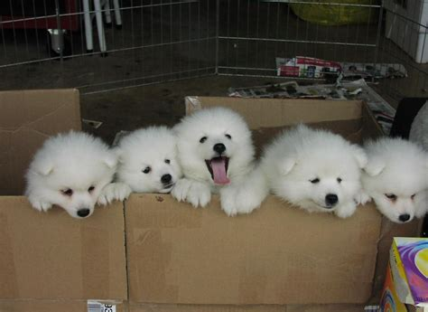 Friday Canine Box Of White Fuzzfor  Ee  Sale Ee   Preliator