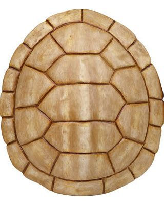 now new year deal ivory faux turtle shell wall plaque