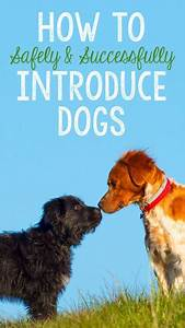 best friends furever how to safely successfully introduce With how to introduce a new dog to an aggressive dog