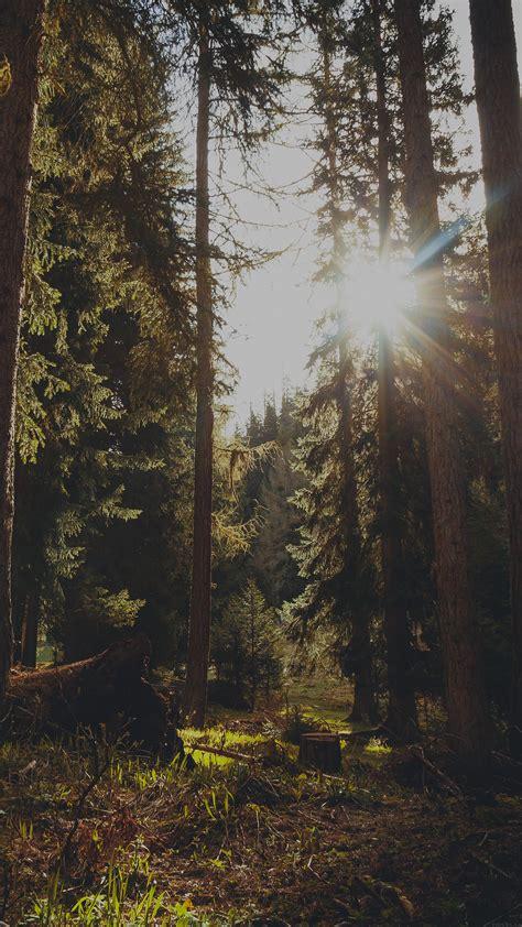 mi mountain sunlight dark marco jorger nature papersco