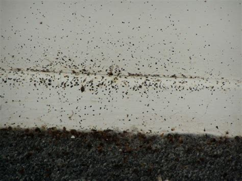 Bed Bugs Nyc by Bed Bugs In New York City Study