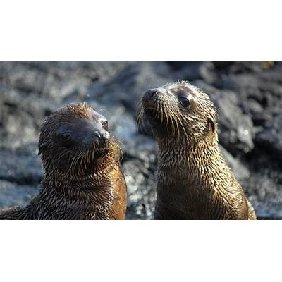 When is the best time to visit The Galapagos Islands