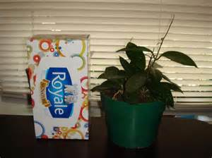 hoya real indoor plant 6 quot plant pot west regina regina