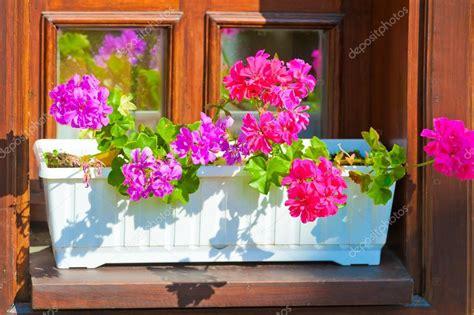 davanzale finestra fioriere con fiori rosa sul davanzale della finestra