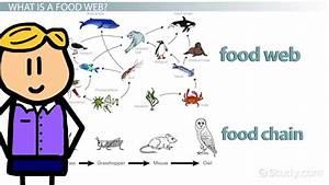 Simple Tundra Biome Food Web   www.imgkid.com - The Image ...