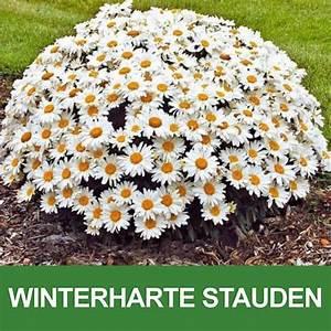 Winterharte Stauden Dauerblüher : winterharte stauden pflanzen und gartenshop pinterest ~ Whattoseeinmadrid.com Haus und Dekorationen