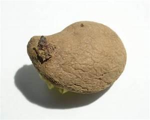 Wucherungen An Pflanzen : bei befall mit kartoffelkrebs drohen landwirten bis zu 20 jahre anbauverbot acker in unadingen ~ Buech-reservation.com Haus und Dekorationen