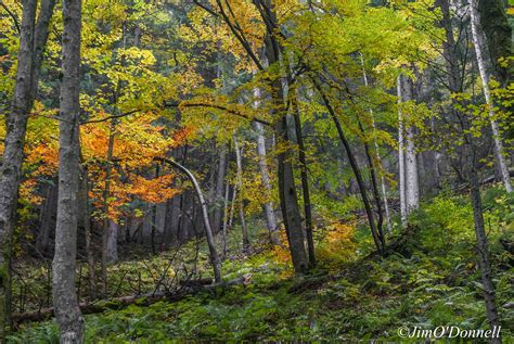 slovakia europe forests autumn forest deciduous jim photographer author most donnell tatras valley mix hang long