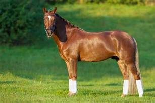 Small Non Shedding Dogs Easy To Train by American Quarter Horse