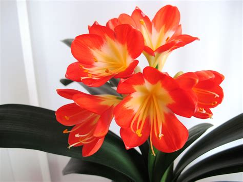 Zimmerpflanze Orange Blüte by Houseplants Now Inpiring Your Green Thumb