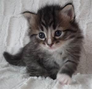 Mit Katze Umziehen : tieranzeigen ausschliesslich kleinanzeigen ~ Michelbontemps.com Haus und Dekorationen