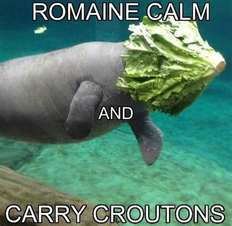 Manatee Meme Celebrate Manatee Appreciation Day With Our Favorite Sea