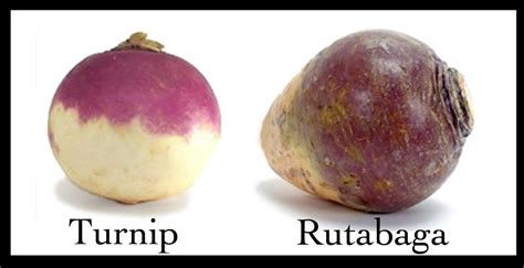 rutabaga vs turnip produce confusion yam or sweet potato rutabaga or turnip kale or spinach health stand