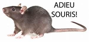 Comment Tuer Un Rat : comment se dbarrasser des mulots et campagnols mulot with ~ Mglfilm.com Idées de Décoration