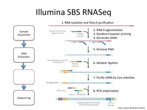Rna Seq Illumina Rnaseq Basics Ngs Application1