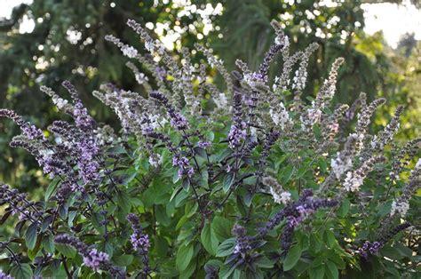 Garten Norden Pflanzen by Mit Den Richtigen Pflanzen Den Bienen Helfen Essen Nord