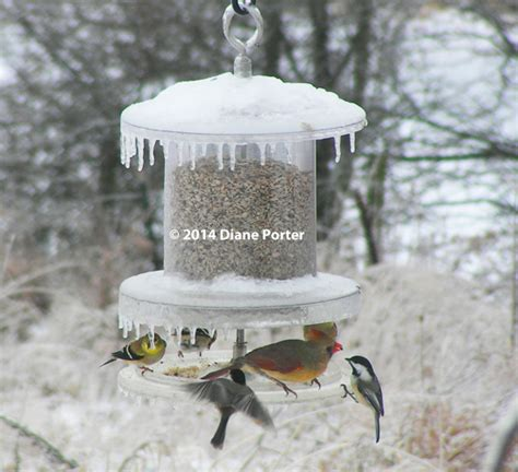 All Weather Feeder — Handson Review By Diane Porter