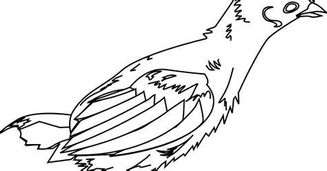 gambar mewarnai ayam betina cara menggambar dan mewarnai