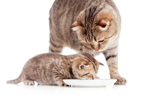 kittenfutter im test nahrung fuer junge katzen