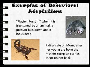 Lesson 1. What are Adaptations? - ppt video online download