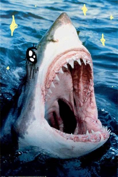 Shark Kawaii Sharks Waifu Week Anime Desu