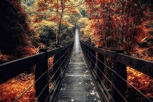 Nature, Landscape, Bridge, Wooden, Surface, Fall, Forest