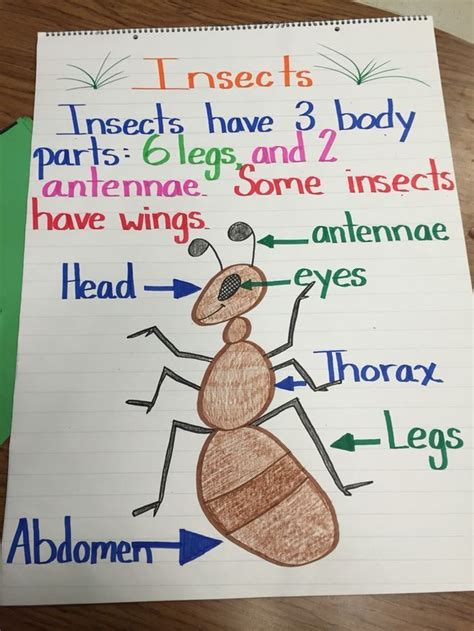 insect anchor chart for teaching the parts of an insect 423 | b72715a8025e38a2033574762f62a3a1