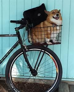 project dog bike