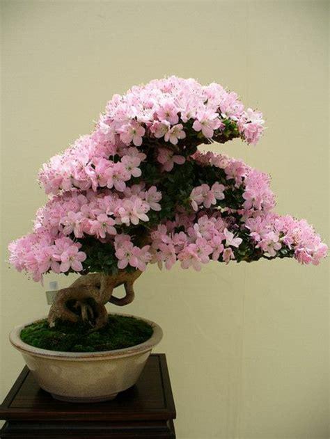 chambre japonaise savourez la beauté de la plante d intérieur dans notre